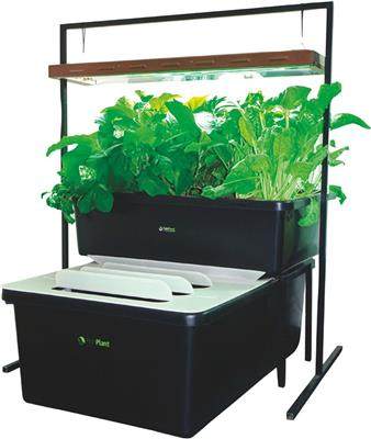 FishPlant Sistema Familiar Completo